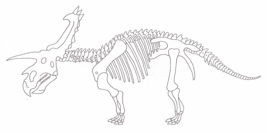 Anchiceratops skeleton by SommoDracorex