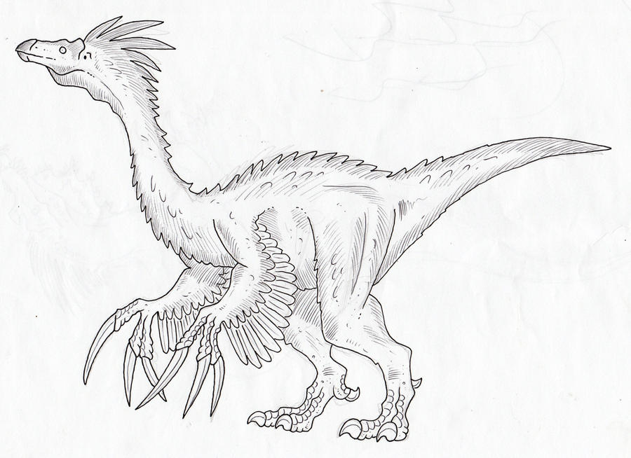 cassowary coloring pages - photo#39