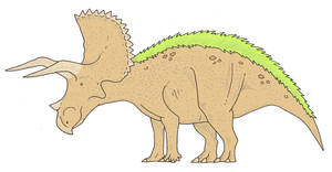 Colored triceratops
