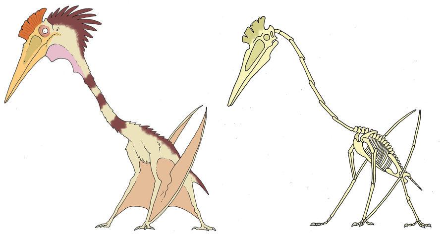 Hatzegopteryx Size Hatzegopteryx by Sommo...