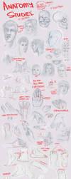 Anatomy Studies by trisketched