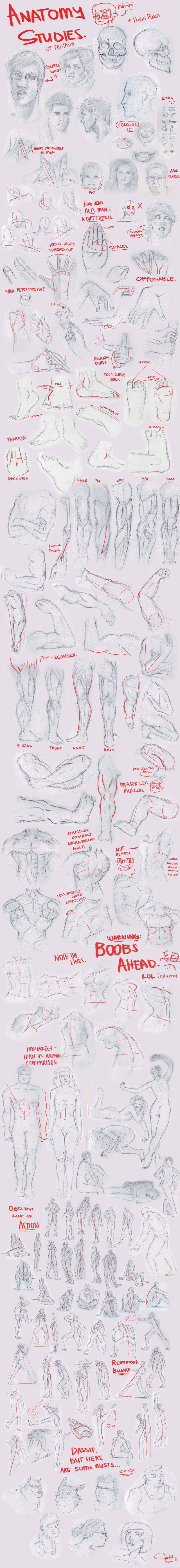 Anatomy Studies by trisketched