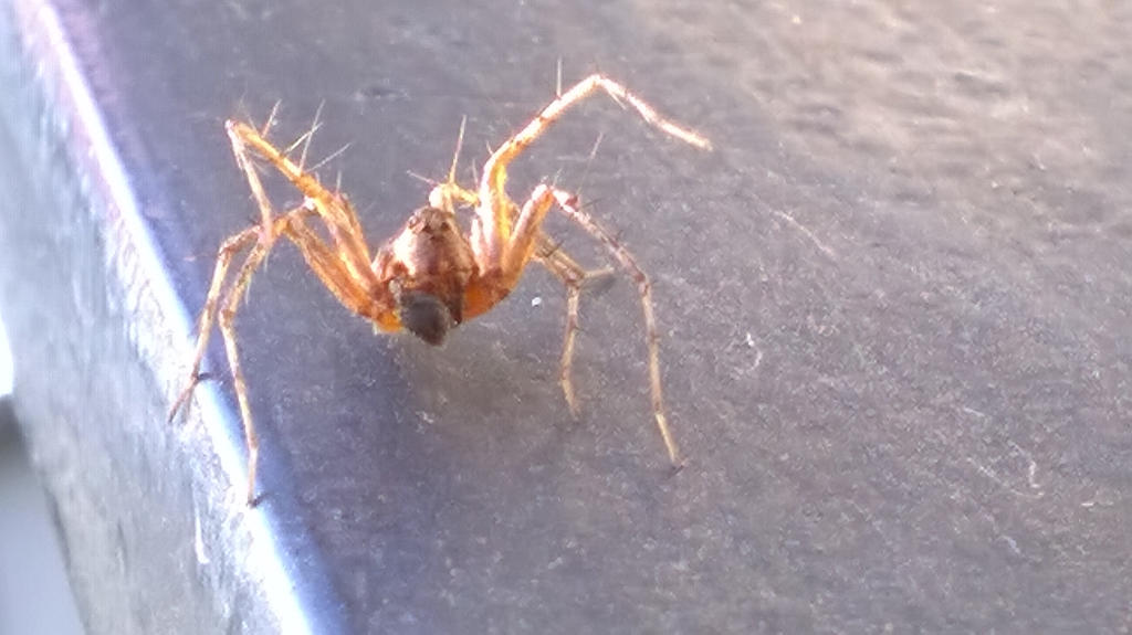 Curious little spider ^_^ by Superovermind