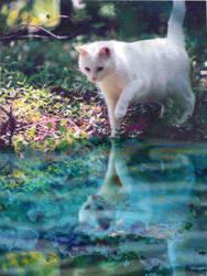 chewky reflected by CReevesABudd