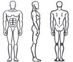 Male Anatomy - Broad Shoulders