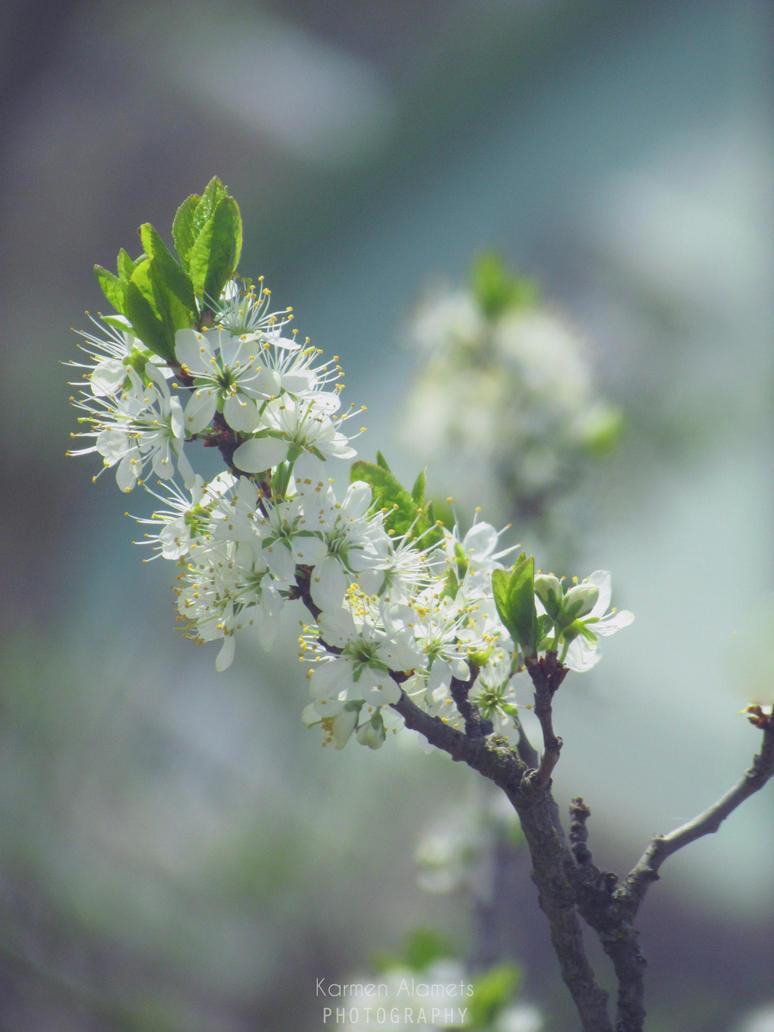 Spring, oh spring by KarmensPhotos