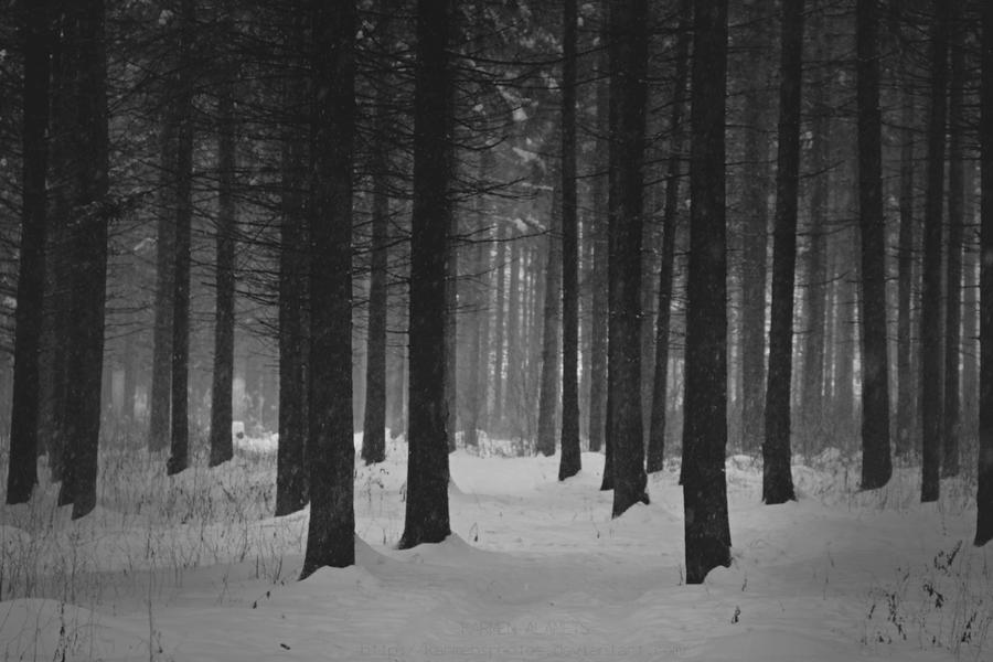 A Walk in the Forest by KarmensPhotos