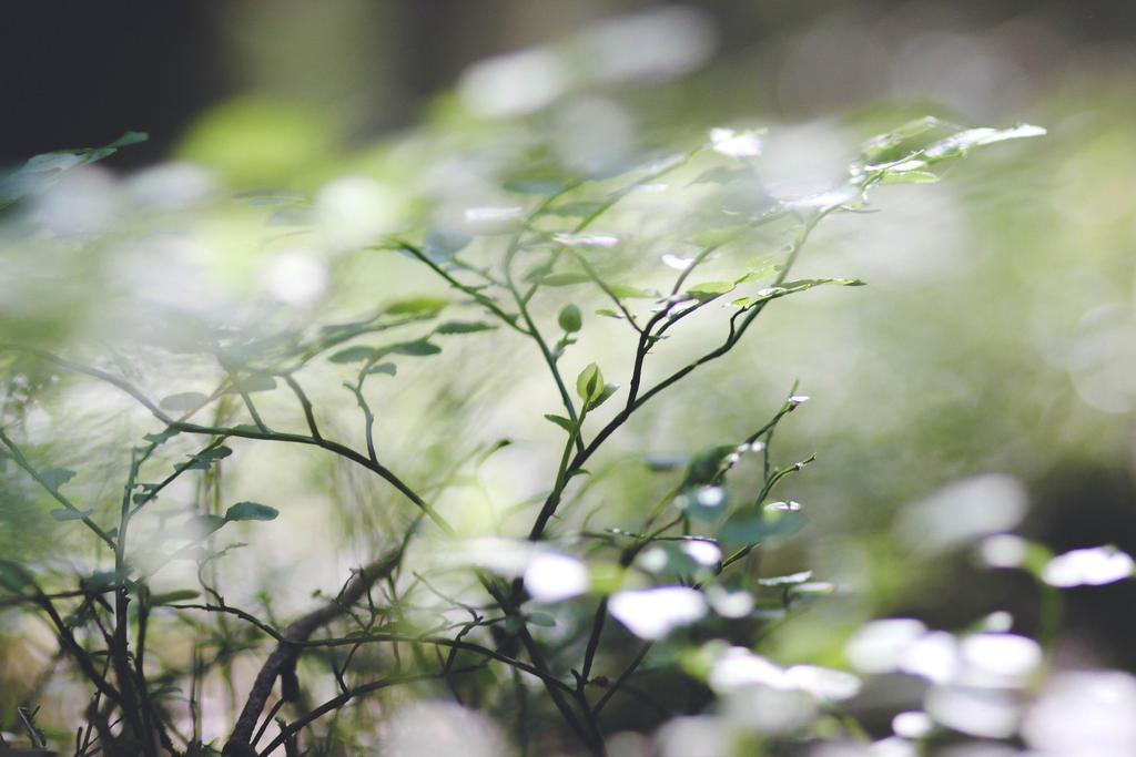 green by KarmensPhotos