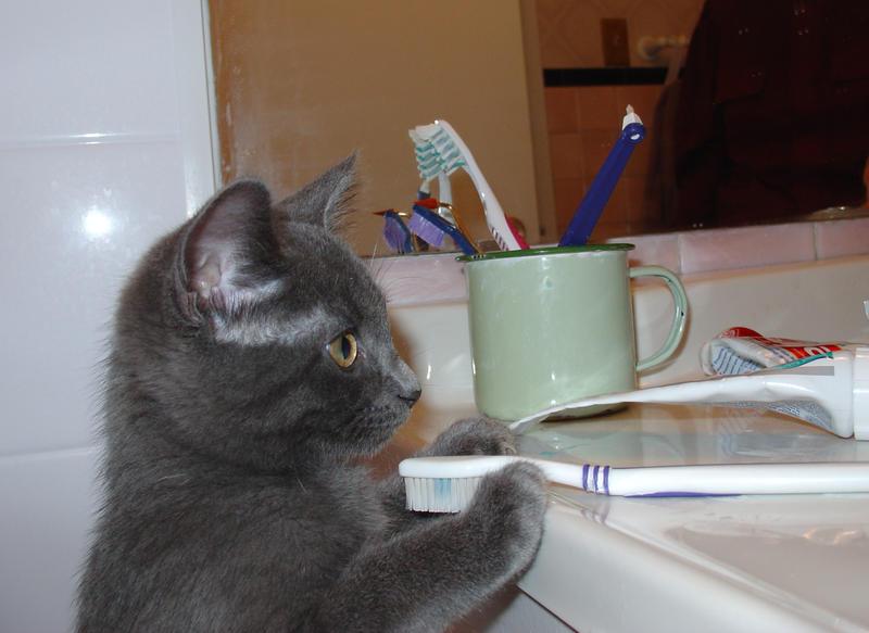 Kitten_2_by_Vickart.jpg