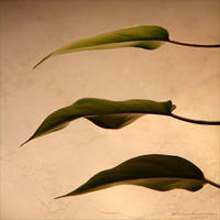 Foliage 55
