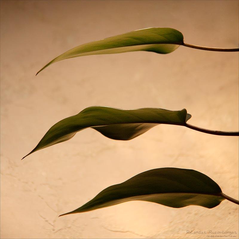 Foliage 55 by rici66