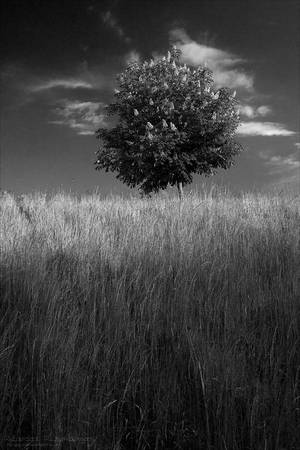 Tree On The Hill by rici66