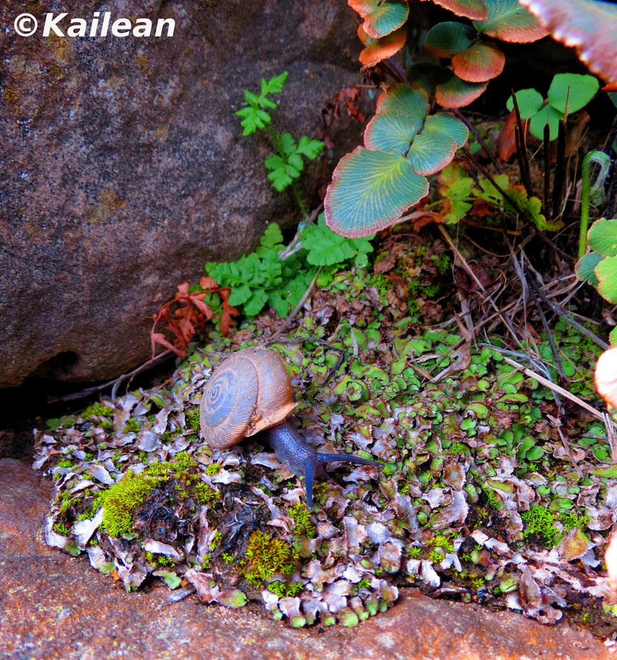 Snail in Spring Foliage by Kailean