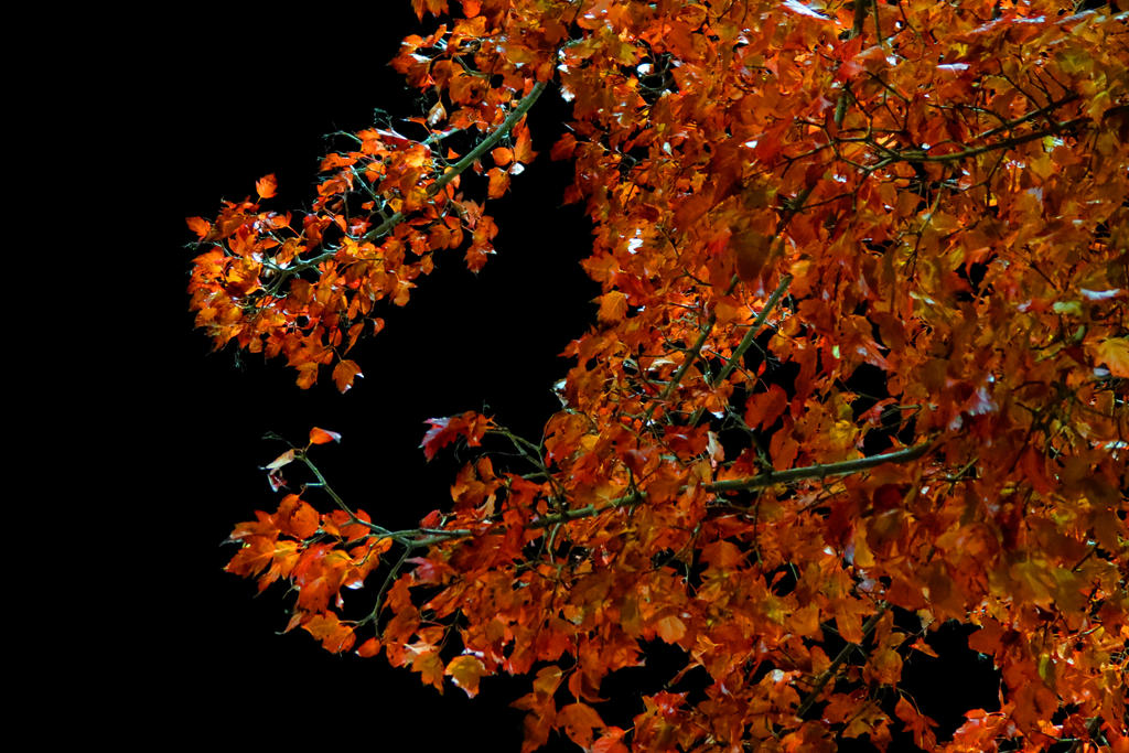 Fall Colors_Light Against Darkness by Kailean