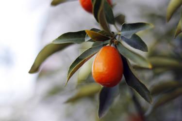 Fresh orange by AndreiNechita