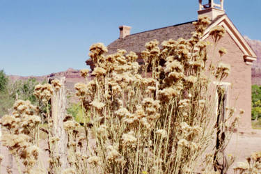 Scenes From a Ghost Town-weeds