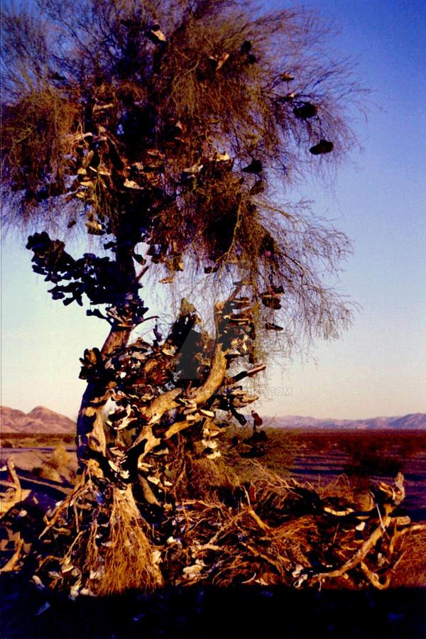 Shoe Tree.