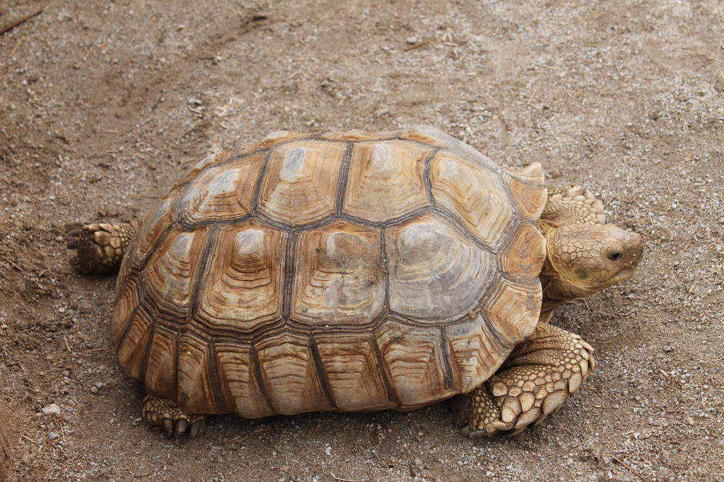 1000 images about turtle reference on pinterest animals