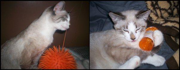 Yeti likes orange by holliehood