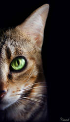 Feline eyes by cristell15