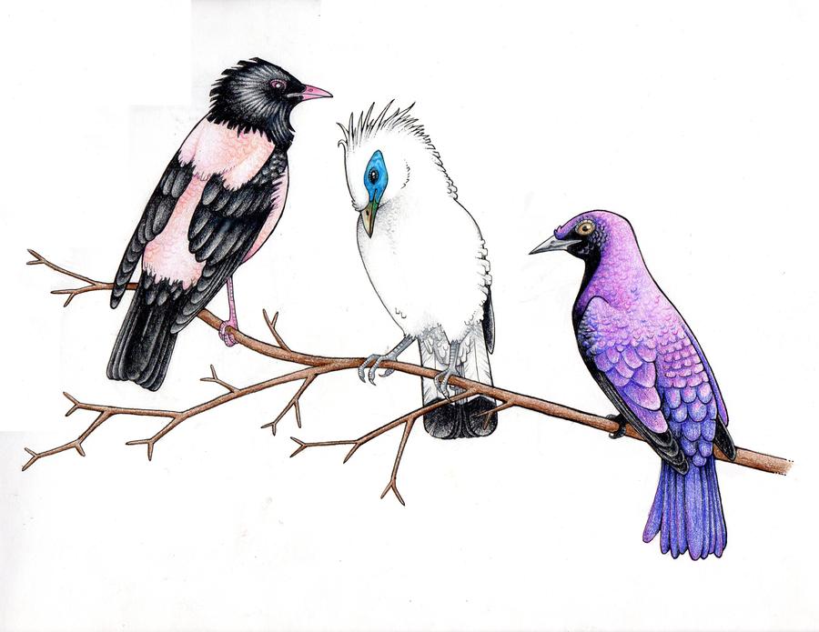 Starlings by Cinnybird
