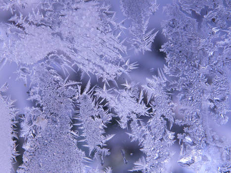 Frost Stock7