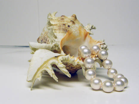 Conch Shell with Pearls Stock1