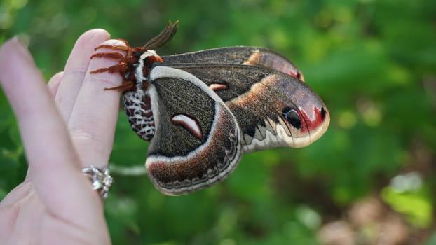 Giant Moth 1