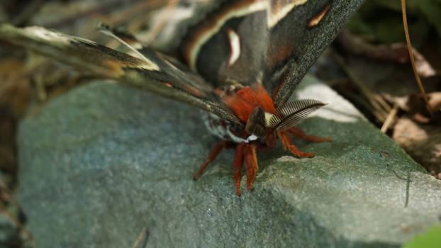 Giant Moth 2
