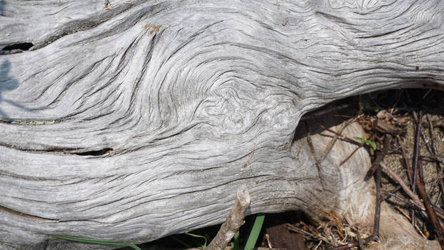 Dried Tree Texture 1