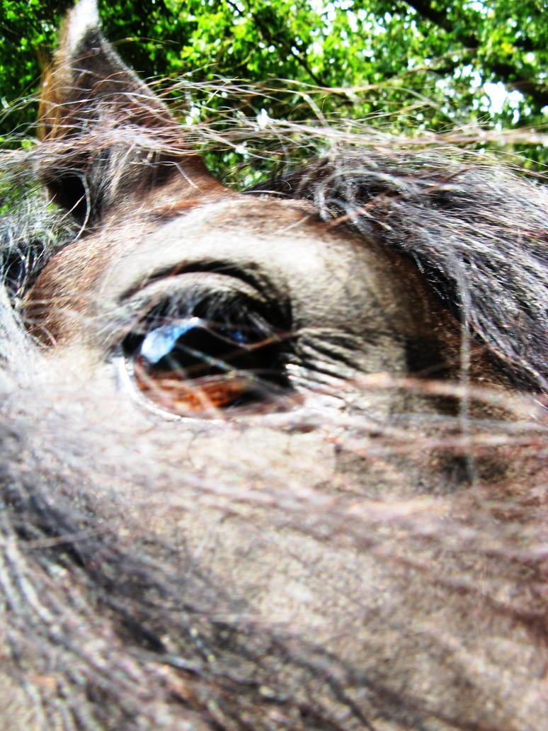 Horse 1 by MakkieFotografie
