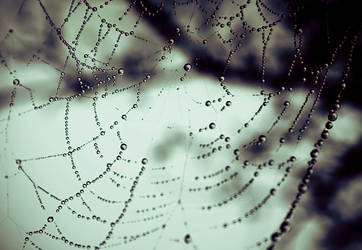 Spiderthoughts by mila2boo