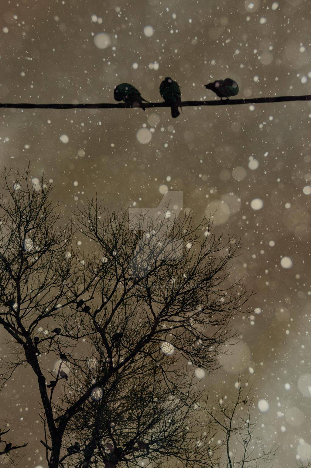 .. by JohannaHAMMETT