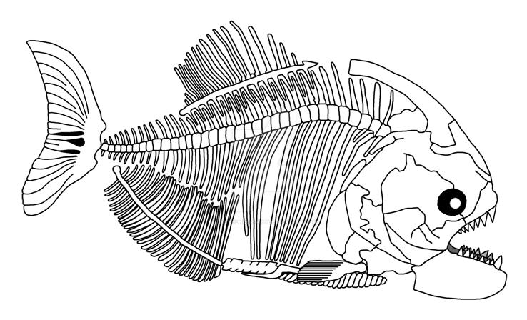 Piranha Skeleton by TheThunder-Art