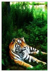North Eastern Tiger by o0moonman0o