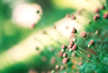 Garden by bmud