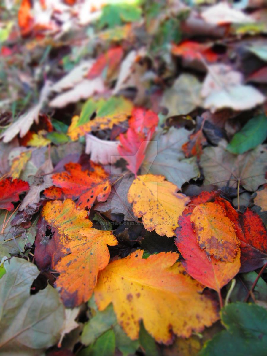 Autumn3 by ChepcherJones