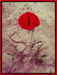 Flower in desert by Demon-of-Death-665
