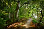 Denmark / Moens Klint / Glowing forest