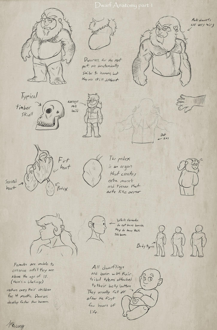 Interesting Facts About Dwarves Anatomy Practice 1 By Missuny On
