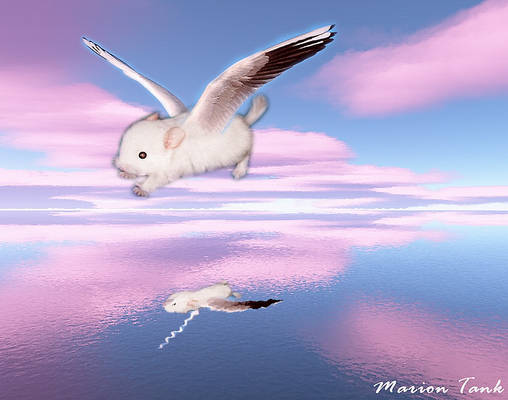 Floating on pink Clouds