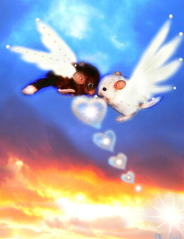 Chinchilla Love is in the Air by Villa-Chinchilla