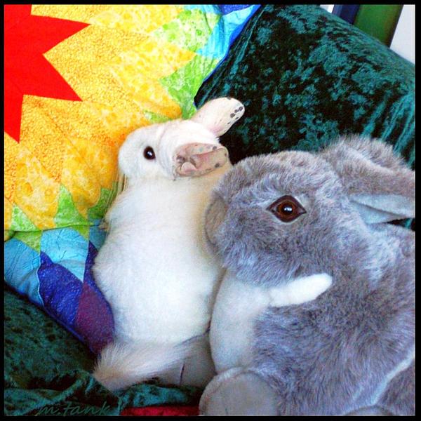 Chinchilla Naptime with Bunny by Villa-Chinchilla