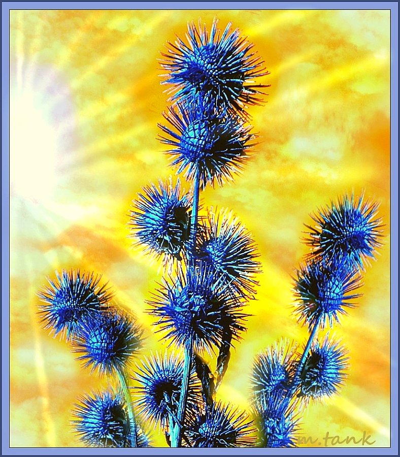 Prickly Blue - Edit Project for Artworldtoday by Villa-Chinchilla