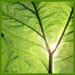 Natural Green Foliage Screen