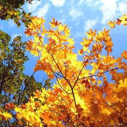 Golden October by Villa-Chinchilla