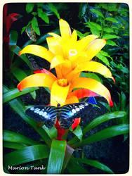 Butterfly jam by Villa-Chinchilla