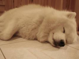 Ima sleeping by Shaylane