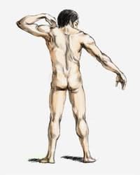 Figure Drawing - Male Back