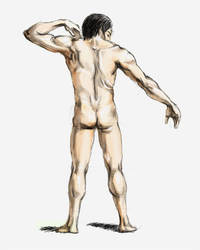 Figure Drawing - Male Back by powertaiyou
